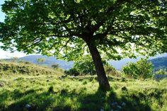 Linde in het voorjaar gefotografeerd tijdens kruidenstage http://sites.google.com/site/kruidwis/