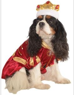 The Posh Puppy Boutique has outfits fit for your King and his Queen.