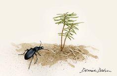 douglas fir seedling  denise dahn