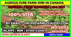Vacancy For General Farm Workers in Canada Apply Job, How To Apply, Job Offers, Agriculture Farming, North And South America, Find A Job, Surrey, British Columbia, Language