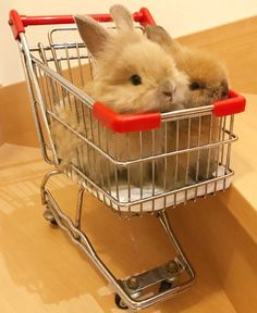 Now I know who is stealing grocery carts and leaving them all over the city! Cute Baby Bunnies, Funny Bunnies, Cute Babies, Fluffy Animals, Animals And Pets, Mundo Animal, Cute Little Animals, Cute Animal Pictures, Animals Beautiful