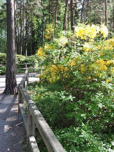 Rhododendron Park, Helsinki, Outdoor Furniture, Outdoor Decor, Finland, Parks, Home Decor, Homemade Home Decor, Interior Design