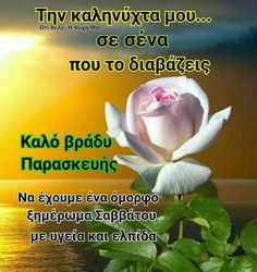 Beautiful Pink Roses, Good Night, Nighty Night, Good Night Wishes