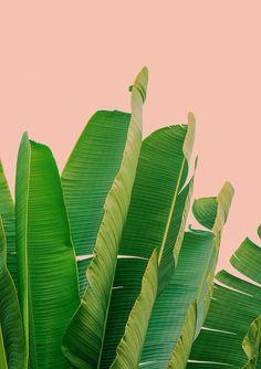 Banana Leaves Framed Art Print by Rafael Farias - Vector Black - Framed Wall Art, Framed Art Prints, Art Rose, Pastel Home Decor, Pastel House, Whatsapp Wallpaper, White Wall Art, Pink Art, Pastel Pink