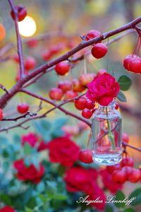 Ich wünsche euch einen schönen Samstagabend! - Wohnen und Garten Foto