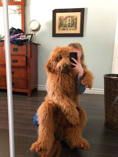 Are There Really Any Best Dog Breeds? Each Dog is an Individual but there are Certain Breed Traits bilder This Is what Your Favorite Dog Breed Says About You Cute Funny Animals, Cute Baby Animals, Animals And Pets, Nature Animals, Wild Animals, Cute Dogs And Puppies, I Love Dogs, Doggies, Chien Goldendoodle