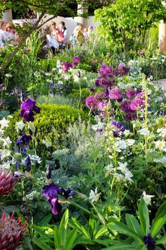 Bildergebnis für Best Designs from 2015 Chelsea Flower Show