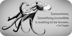 Octopus Animal Symbolism: Octopus Meaning on Whats-Your-Sign Animal Symbolism, Animal Meanings, Symbols And Meanings, Water Animals, American Traditional, Animal Totems, Science Art, Tentacle, Frases