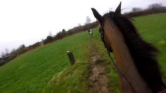 GoPro footage from our cross country session yesterday! For more information on Irish Equestrian Vacations please . Cross Country Jumps, Horses For Sale, Show Jumping, Cob, Horse Riding, Equestrian, Clinic, Jazz, Irish