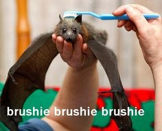 Rub my head with a giant toothbrush, Giant Friend!  Make it so!