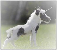 Baby Unicorns Unicorn Club, Baby Unicorn, Unicorn Art, Cute Unicorn, Unicorn Horns, Elf Warrior, Unicorn Tattoos, Cat Garden, Fairy Dust