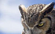 3840x2400 Wallpaper owl, eyes, evil, heaven