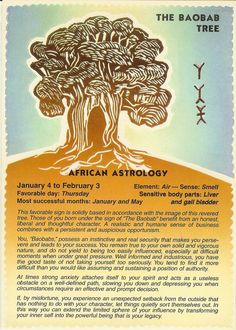 Zodiac Unlimited African astrology postcard: The Baobab Tree