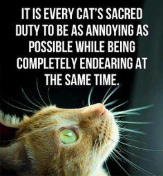 YEP... I'M THE CAT!