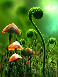 Moss, ferns and fungi. Art Et Nature, Science And Nature, Fotografia Macro, Mushroom Art, Mushroom Fungi, Orange Mushroom, 3d Artwork, Macro Photography, Floral Photography