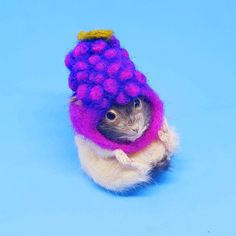 Taxidermy Hamster in Berry Hat Taxidermy, Berry, Unique Jewelry, Hats, Handmade Gifts, Character, Vintage, Kid Craft Gifts, Hat