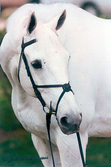 Grand Prix jumping thoroughbred, Gem Twist,