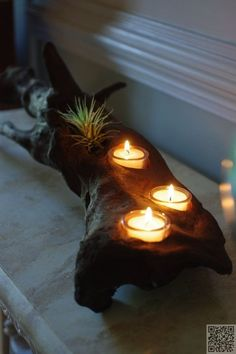 Driftwood Candle Holder with air plants ~ Cute and Clever!