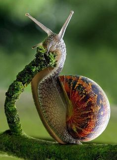 Snail eating at top speed.