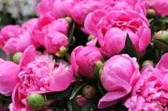 Tesselaar flower market