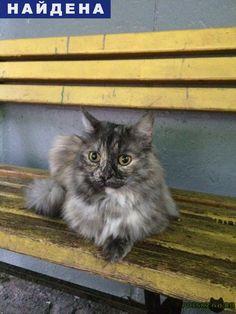 Найдена кошка г.Москва http://poiskzoo.ru/board/read27890.html  POISKZOO.RU/27890 На вид молоденькая, чистая, породистая, домашняя и очень ласковая, бежит к рукам и мурлыкает. Собак не боится, подходит без проблем, по ходу жила с собакой  РЕПОСТ! @POISKZOO2 #POISKZOO.RU #Найдена #кошка #Найдена_кошка #НайденаКошка #Москва