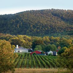 Barboursville Vineyard, part of the Monticello Wine Trail, Charlottesville, Virginia