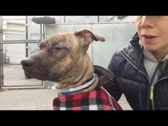 **MUST SEE VIDEO** DUCKEE – A1100678 TO be KILLED 1/8/17 PLZ PLZ hurry, This 4 yr old lil petite brindle beauty is QUICKLY running out of TIME to be SAVED ASAP! So if u would like a gentle, precious, cuddly lil dumpling like her in your life, DONT hesitate for a minute, PLZ VISIT: nycdogs.urgentpodr.org ASAP her LIFE is on the LINE
