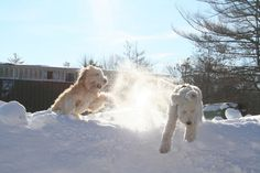 #snow #dogs  #dogs #winter #adorable Snow Dogs, Christmas Time, Winter, Outdoor, Winter Time, Outdoors, Outdoor Games