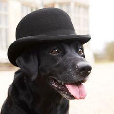Bowler hat | Men's hats from Charles Tyrwhitt, Jermyn Street, London