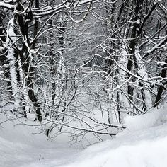 #cimone #cimonesci #passodellupo #sci #skying #sestola #igersemiliaromagna #igersitalia #neve #snow