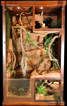 THIS is the ultimate in Snake enclosures and I'd love something similar for our future pet.