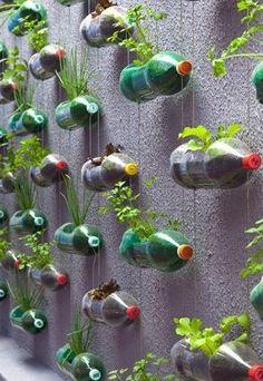 Hoe handig? Van lege plastic flessen kruiden/planten kweken!