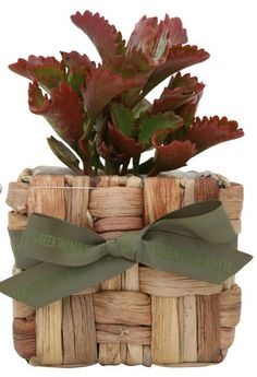 With an exclusive assortment of from magnolias, lemon, lime to our association, Green Thumb Gifts, has been a popular plant gift providing companies in Australia. Whole range is fresh and nominally priced.