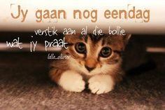 Jy gaan nog eendag verstik aan al die bollie wat jy praat. Cute Baby Animals, Animals And Pets, Funny Animals, Crazy Cat Lady, Crazy Cats, I Love Cats, Cute Cats, Kittens Cutest, Cats And Kittens