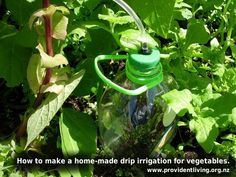 How to water vegetables with less time and effort.