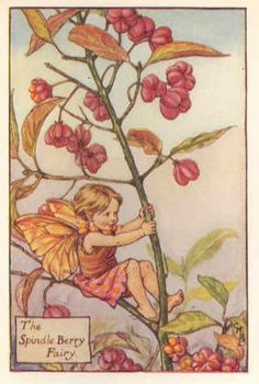 FLOWER FAIRIES 1930's: SPINDLE BERRY. Old Print. Artist: Cicely Barker.
