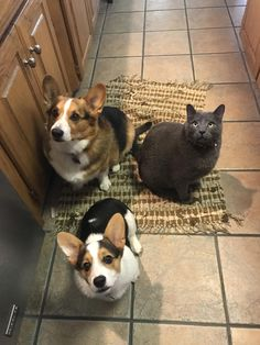 Everytime my mom cooks anything these three put on their best beg face