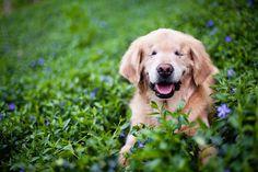 Descubre la historia de Smiley, el perro ciego más sonriente