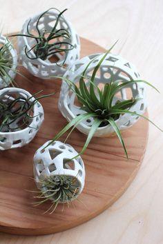 Best Ideas About Air Plants 33