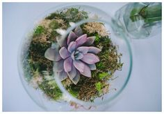 Purple Wedding Succulents