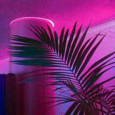 •☽ Ró ☾• #neon #aesthetic #palm #leaf