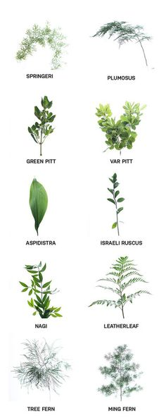 Dark greens for your flowers