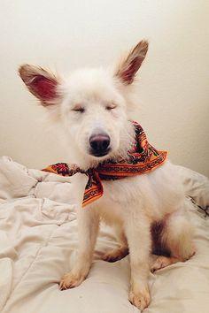 cute #cute #dog  A Healthy Dog is a Happy Dog / www.PetWellbeing.org