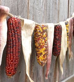 Google Image Result for http://cupcakesandcrinoline.com/wp-content/uploads/2010/10/Autumn-Decorating-Indian-Corn-Garland.jpg