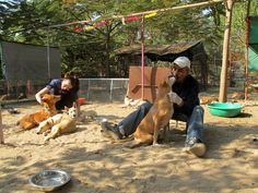 "Volunteer Brittany Montuori in India Udaipur at the Animal rescue Center. December 8 to 22, 2015. "" I have always had a love for animals and a strong desire to help those creatures most deeply in need. I have travelled extensively internationally, both with my family and solo. In my time abroad I have seen so many inhumane, horrific and deeply disturbing conditions of animals. In the slums outside Quito, Ecuador I was deeply saddened by the overwhelming number of stray cats. I used to save…"