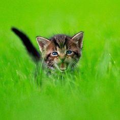 Jungle Kitten by Seth Casteel