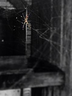 Color centered on spider photo black and white. This was taken by my daughter.