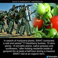 fun facts for nunavut