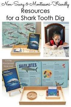 Resources that are non-scary and Montessori friendly for a shark tooth dig; materials for a variety of ages; perfect for Shark Week or an ocean theme - Living Montessori Now Preschool Science Activities, Dinosaur Activities, Kindergarten Science, Preschool Themes, World History Teaching, World History Lessons, History Education, Homeschool Curriculum, Montessori Homeschool