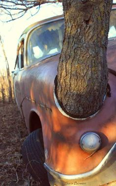 Abandoned car is slowly being taken back by nature with a tree growing straight through it. Abandoned Buildings, Abandoned Houses, Abandoned Places, Abandoned Vehicles, Derelict Places, Abandoned Mansions, Rust In Peace, Rusty Cars, Unique Trees
